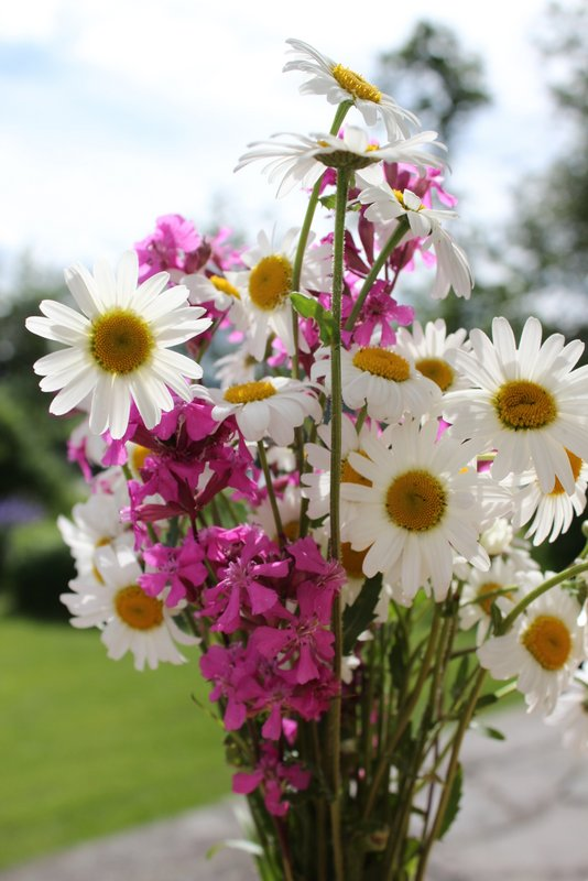 blomsterkrans prestekrage 001-001