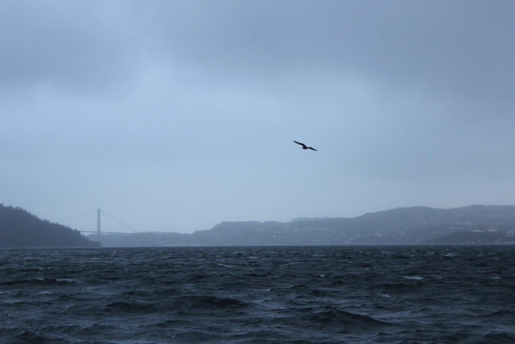 Stormen Nina 050