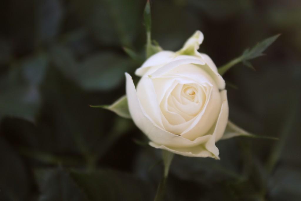 blomster 001