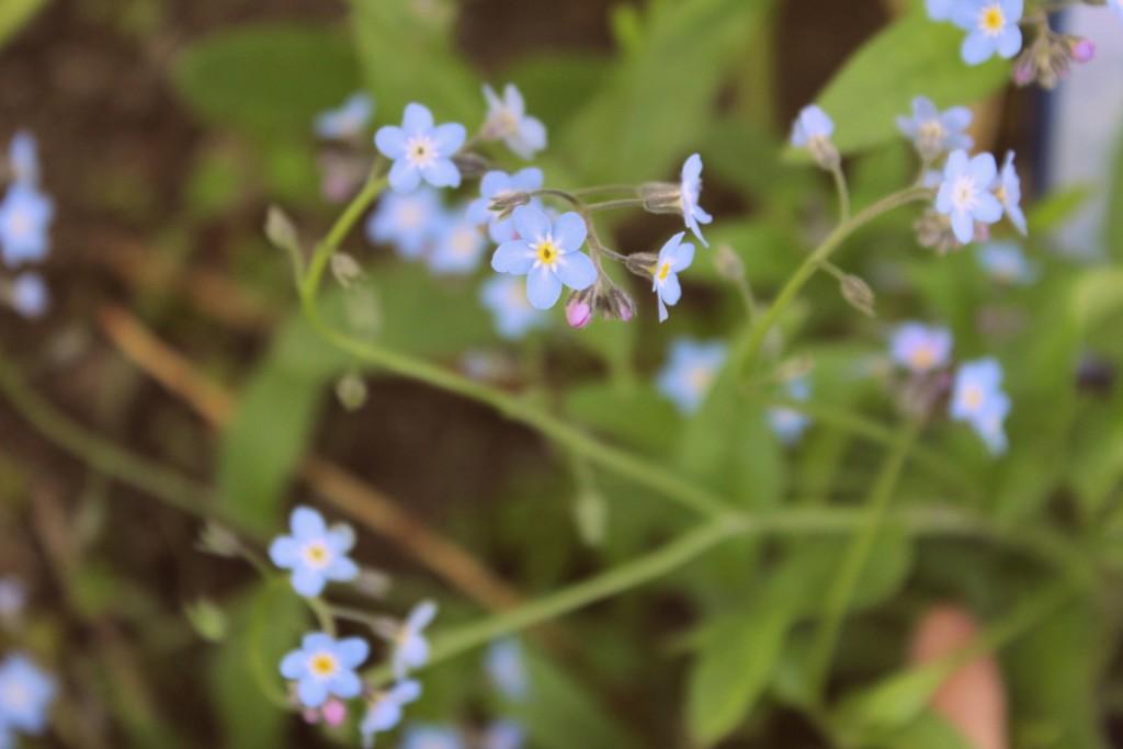 blomster 014