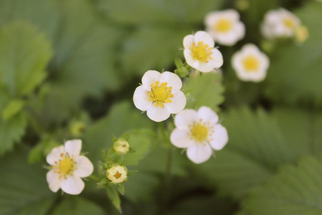 blomster 022
