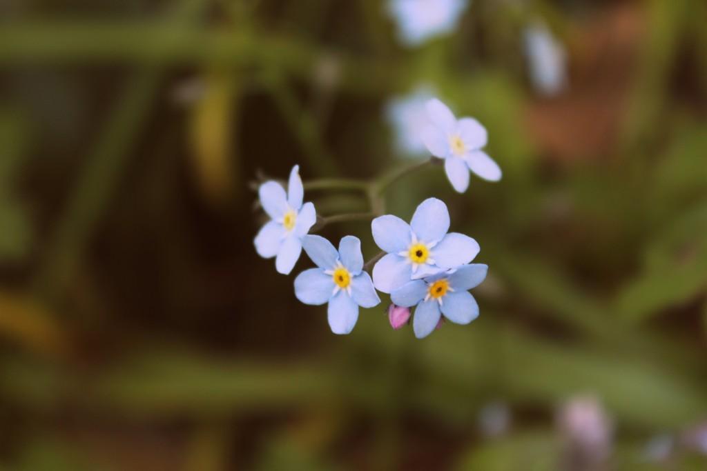 blomster 027
