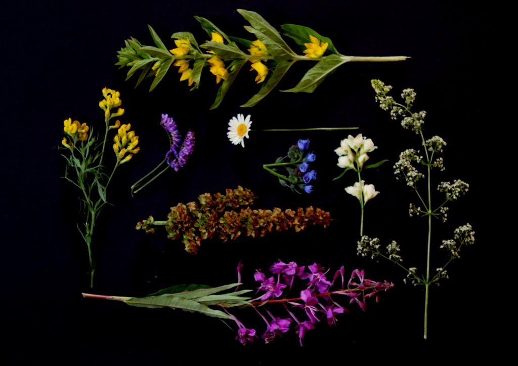 blomster 201 - Kopi
