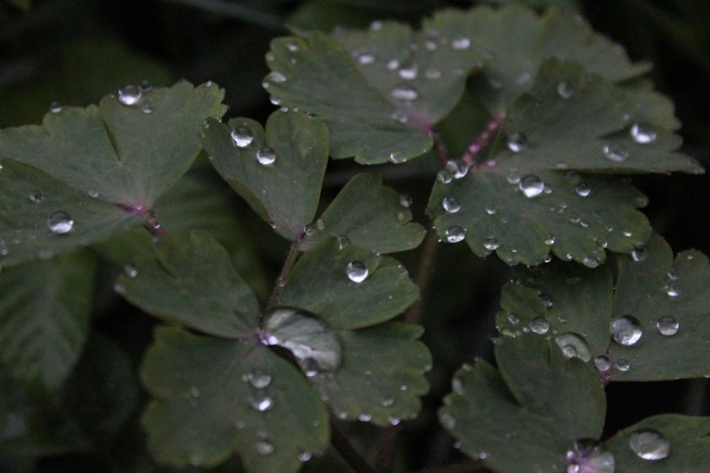 regn i hagen 23.04.15 067