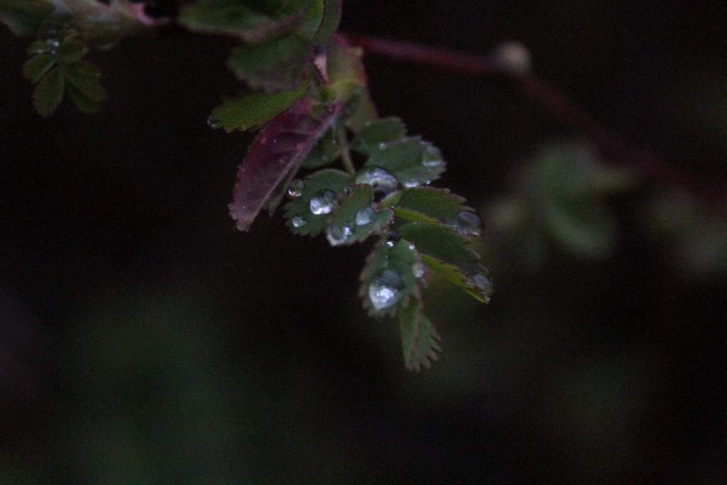 regn i hagen 23.04.15 075