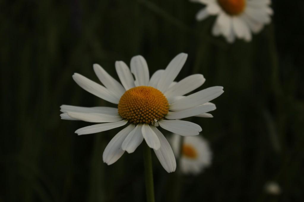 soloppgang 054
