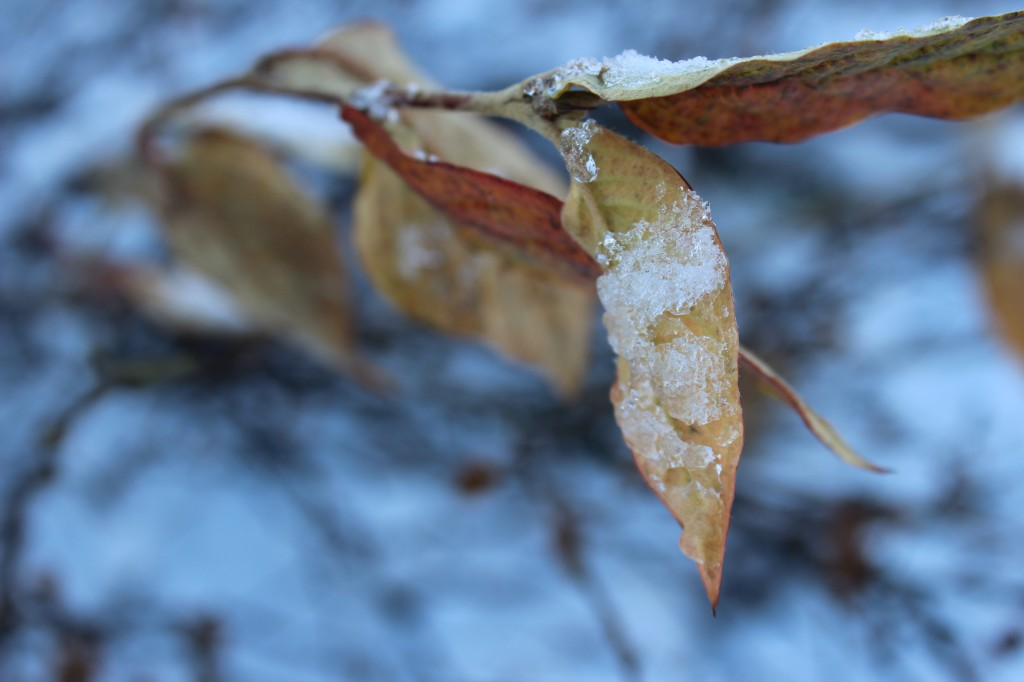 vinterbyen 025