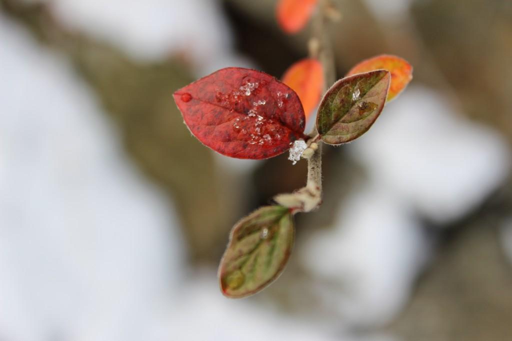 vinterbyen 057