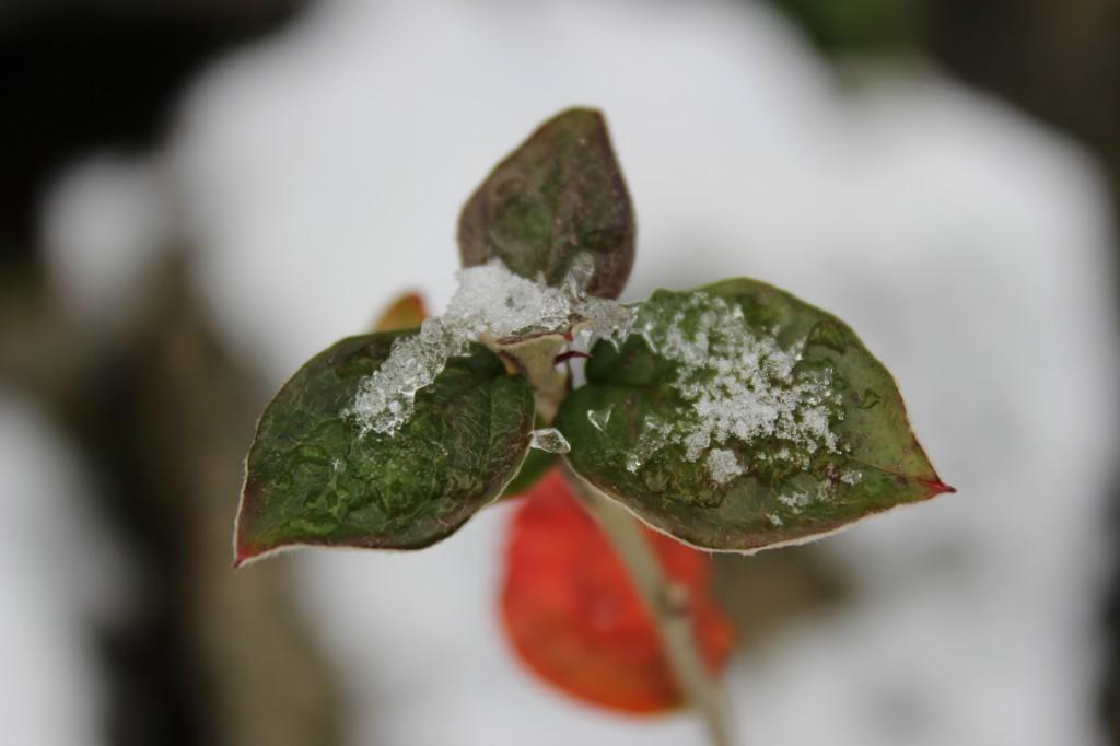 vinterbyen 077